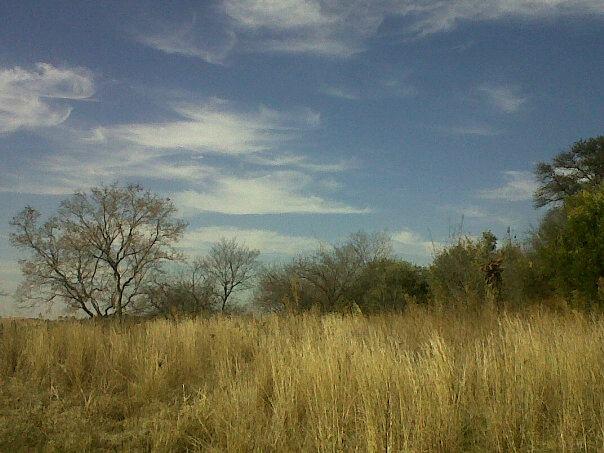 The Golden Savannah: Cradle of Human Kind. Gauteng, South Africa